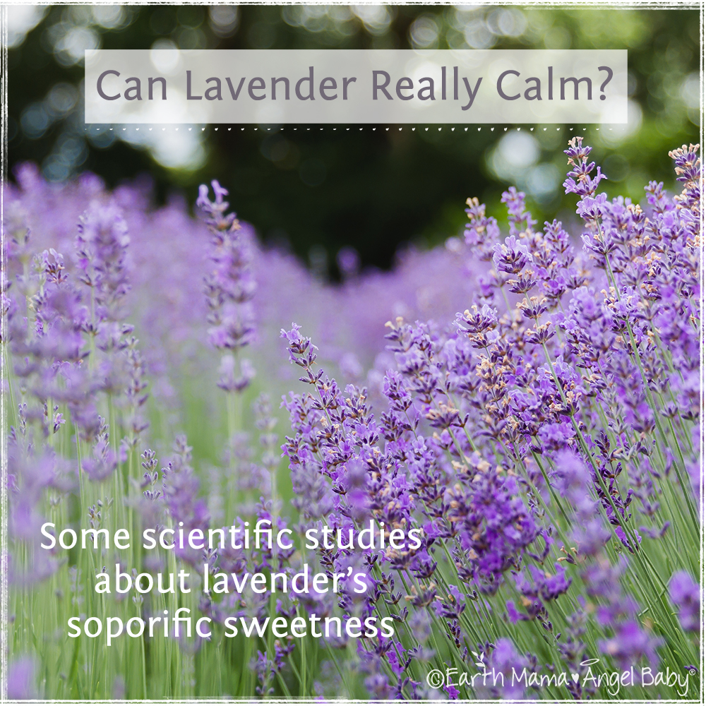 Can Lavender Really Calm?