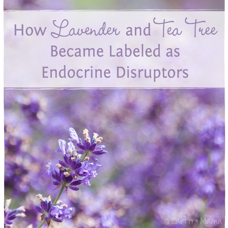 How Lavender And Tea Tree Became Labeled As Endocrine Disruptors